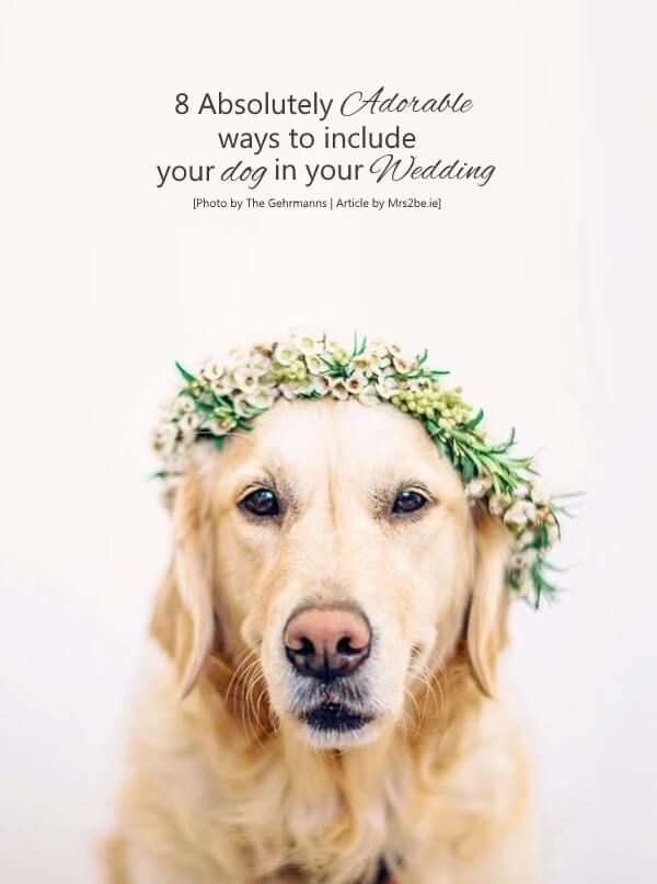 Your wedding celebrations should include everyone in your life that makes you happy - and of course that means your darling dog too!