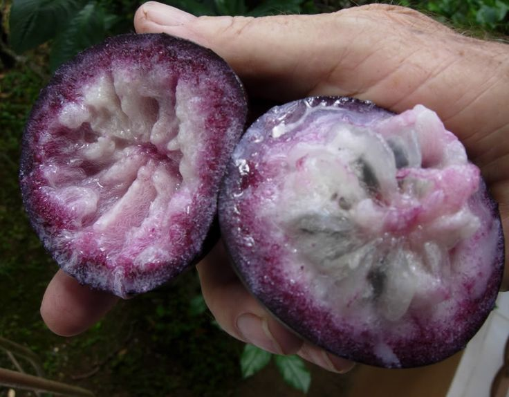 Caribbean Fruits | Purple Star Apple fruit has sweet clear light purplish whitish flesh ...