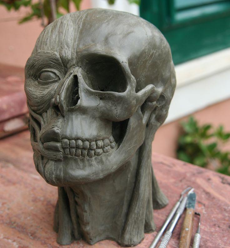 studio muscoli della faccia modellato in argilla aut pietro bitto