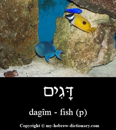 1000 images about hebrew on pinterest language the for Plural of fish