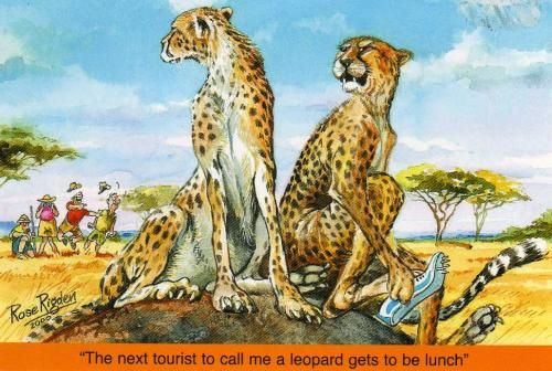 A funny saying from a cheetah