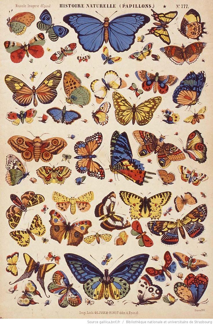 images d'épinal   Images d'Epinal : papillons, oiseaux, animaux, jeu, vie quotidienne ...