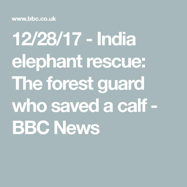 12/28/17 - India elephant rescue: The forest guard who saved a calf - BBC News