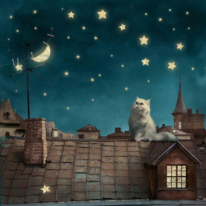 ***un gato en la noche....