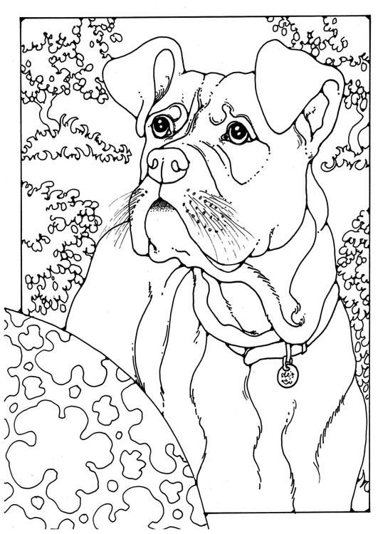 Coloring page boxer - coloring picture boxer. Free ...