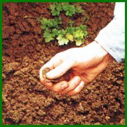 Gartenbodenprüfung, Struktur, pH-Wert und Wasserabfluß testen.  Welche Pflanzen gut wachsen, hängt weitgehend vom Gartenboden ab, der Bodentyp läßt sich mit einer einfachen Gartenbodenprüfung feststellen  http://www.gartenschlumpf.de/gartenbodenpruefung/