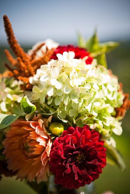 September zinnias dahlias, hydrangeas by Local Color Flowers Baltimore, via Flickr