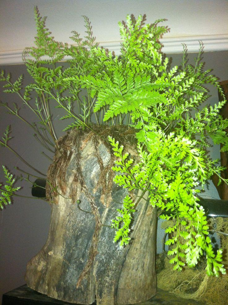 25+ unique Rabbit foot fern ideas on Pinterest | Diy ...