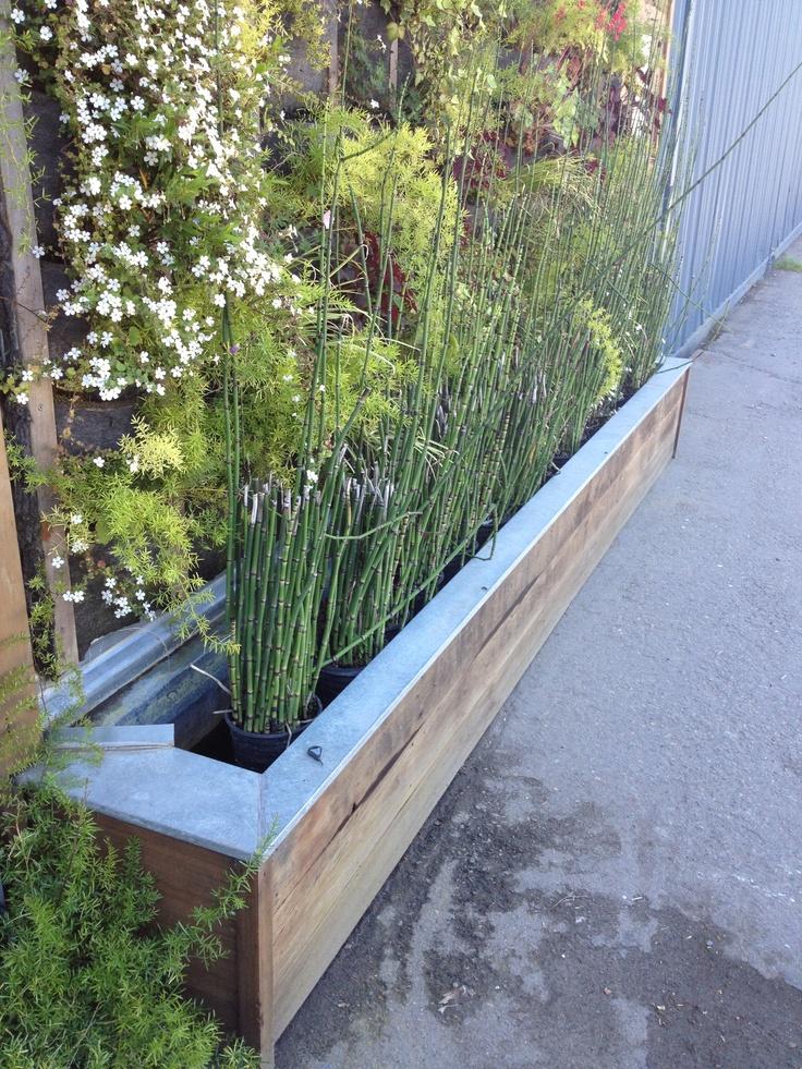 Best 25 Bamboo Planter Ideas On Pinterest Bamboo