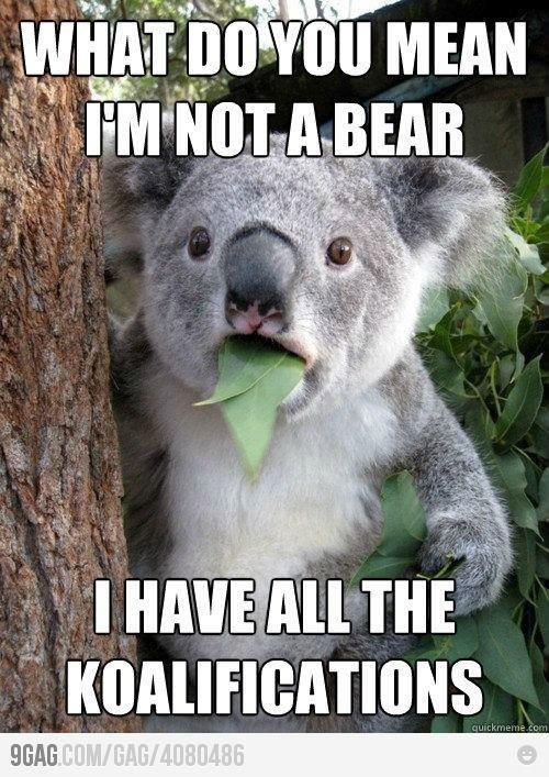 koalasMemes,  Phascolarcto Cinereus,  Native Bears, Funny Stuff, Koala Bears, Humor,  Koalas Bears, Funny Animal,  Kangaroos Bears
