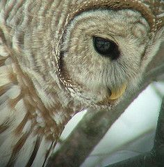 Owl: different angle then most owl pics
