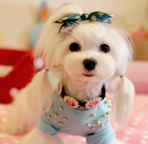 CiCi Crystal Dog/Cat Necklace.