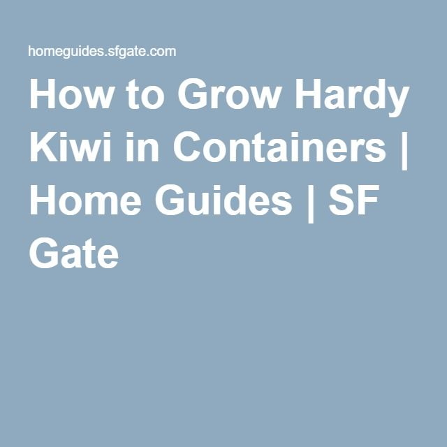 How to Grow Hardy Kiwi in Containers | Home Guides | SF Gate