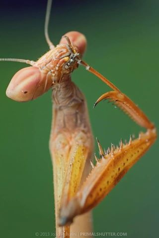 Mmmmm Thinking In Progress Via Go Ahead Bug Me Weird Insects Praying Mantis Cool Insects