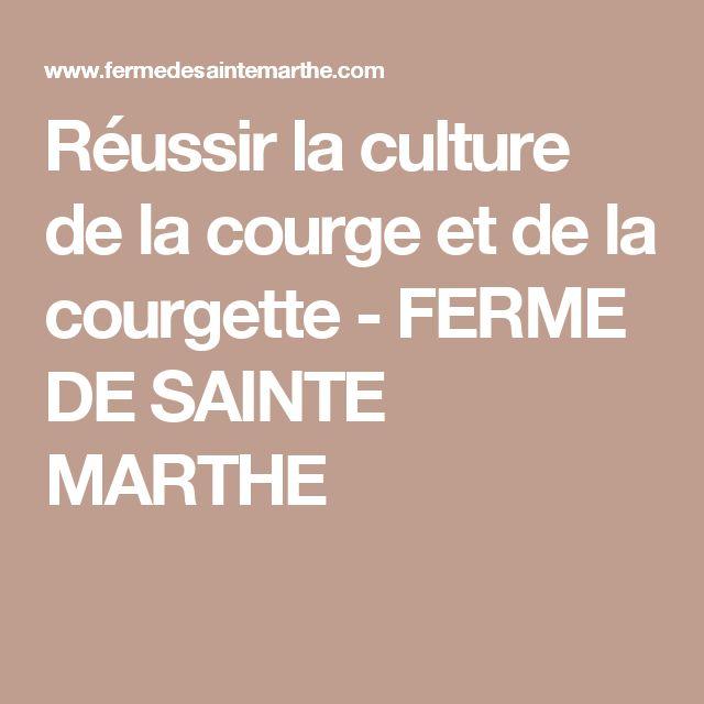 Réussir la culture de la courge et de la courgette - FERME DE SAINTE MARTHE