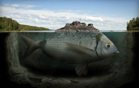 fishy-island-588x388