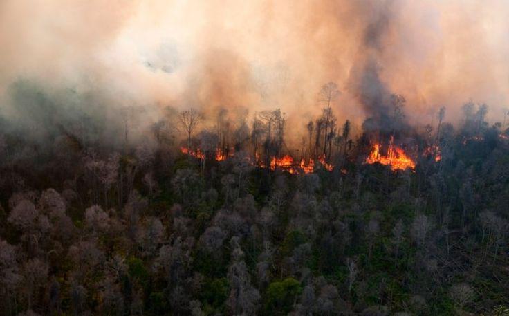 "25 Hektare Lahan di Riau Terbakar, Berubah Jadi Perkebunan Kelapa Sawit https://malangtoday.net/wp-content/uploads/2017/06/kebakaran-lahan.jpg MALANGTODAY.NET –Tim gabungan polisi, TNI, dan regu pemadam kebakaran PT Arara Abadi menemukan sekitar 25 hektare lahan Taman Nasional Tesso Nilo (TNTN) di Kabupaten Pelalawan, Provinsi Riau, Sabtu (10/6) telah terbakar. ""Telah dijumpai lahan seluas kurang lebih 42 ha yang sudah... https://malangtoday.net/flash/nasional/2"