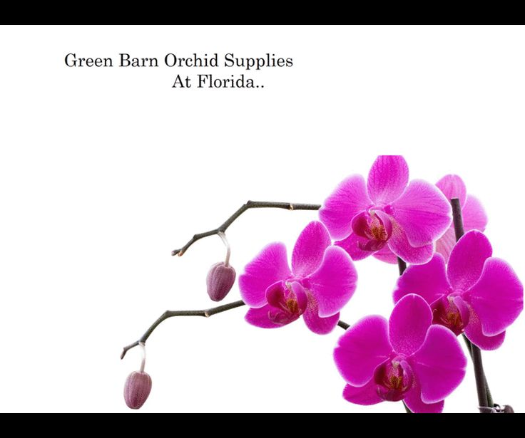 Find the latest collection of orchid potting from Green Barn Orchid Supplies, we are providing you a better quality of orchid potting, For more info call at 561-499-2810 and email in sales@greenbarnorchid.com.