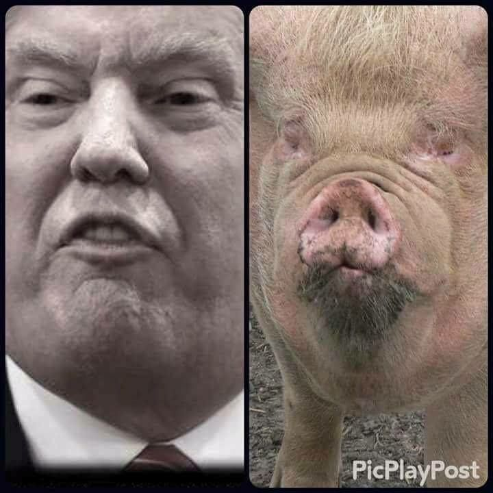 The Bobsy Twins! :). Sorry piggy; you're supposed to look like a pig.