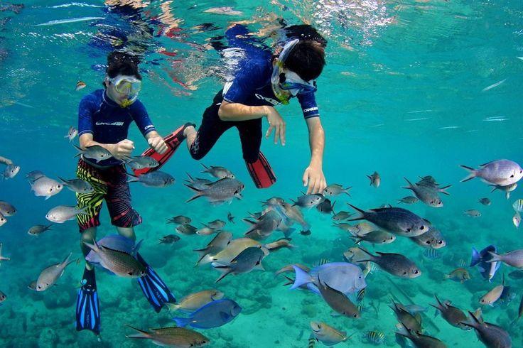 Cas Abao Beach, Curaçao. Dit is een van de weinige zandstranden op het eiland. Huur snorkelmateriaal in een klein winkeltje aan de kust en duik recht in het transparante, kristalheldere water waar je een wordt met de koralen, tropische vissen, sponsdieren en zeeschildpadden.