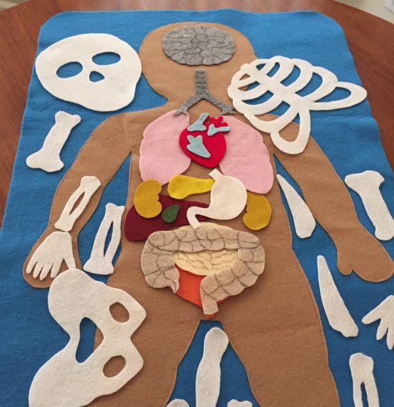 Anatomía humana fieltro educativa / Partes por LupitasLovelyCrafts