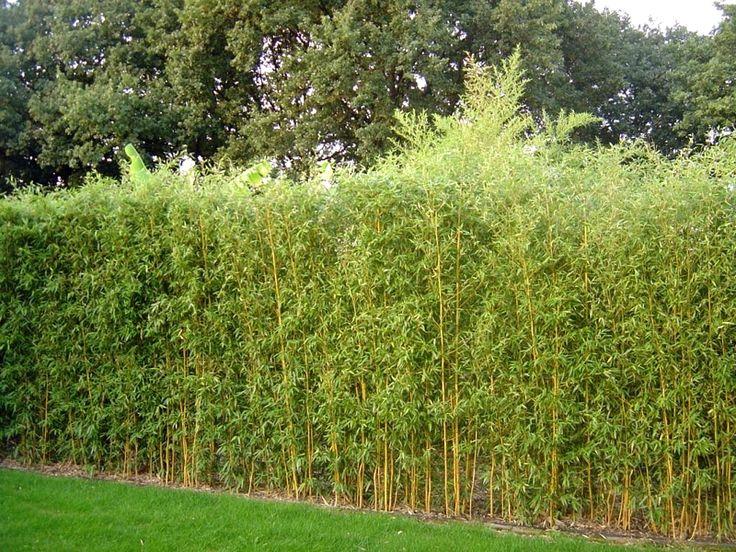 25 beste idee n over natuurlijke omheining op pinterest natuurlijke privacyhekken privacy - Hoe aangelegde tuin ...