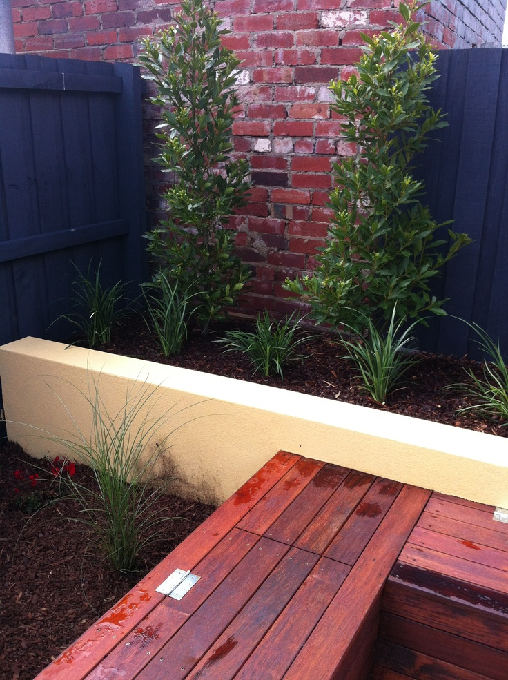 Bay tree hedge and rendered wall