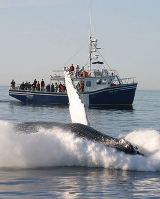 Whale Watching-Bay of Fundy Nova Scotia/New Brunswick, Canada