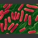 37 - La aplicación de ultrasonidos se llama de procesado mínimo puesto que la idea es destruir los microorganismos que dañan los alimentos pero sin cambiar la apariencia externa de los mismos.