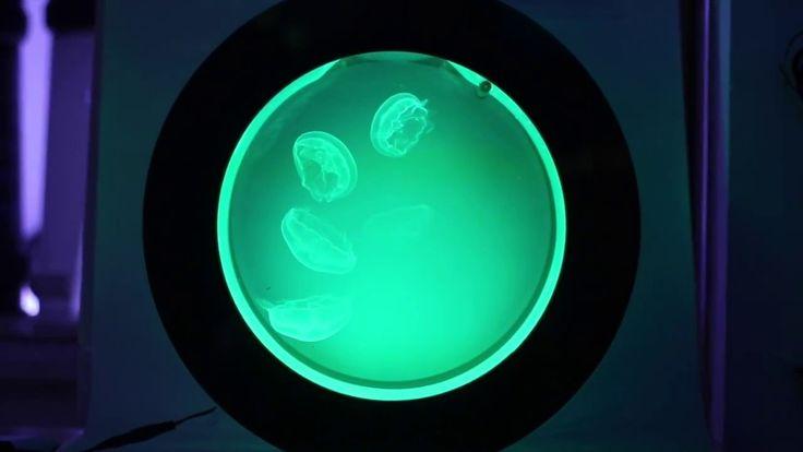 Jellyfish aquariums by Cubic Aquarium Systems