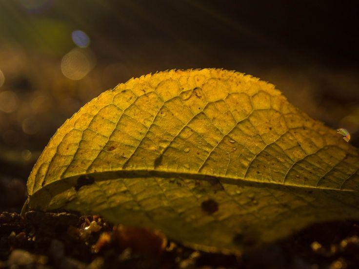 Last Light by Aleksi Lausti on 500px