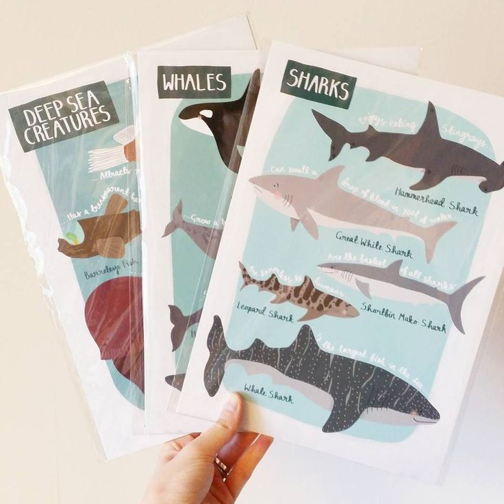 A set of Sea Life Prints being posted today!