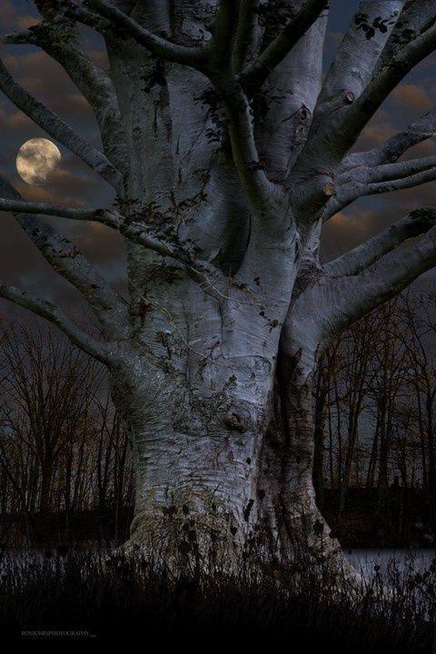tree by moonlight...#moon #moonlight Tree   natuurbeleving www.desteenakker.nl