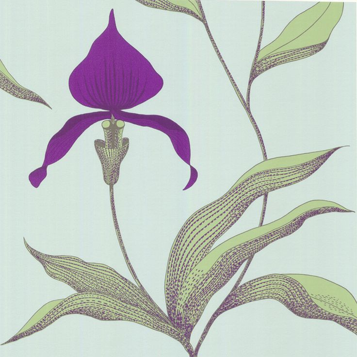 This summer's project: Cole & Son Orchid Wallpaper