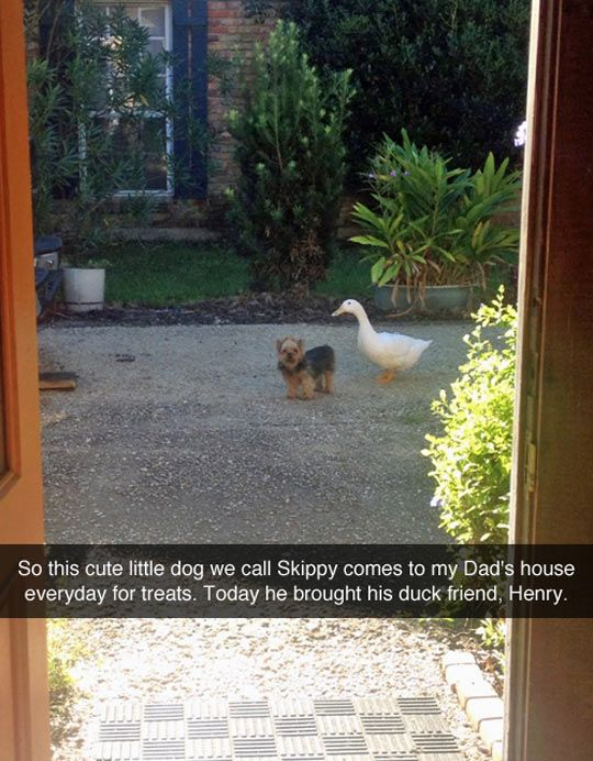 Adventures of Skippy and Henry