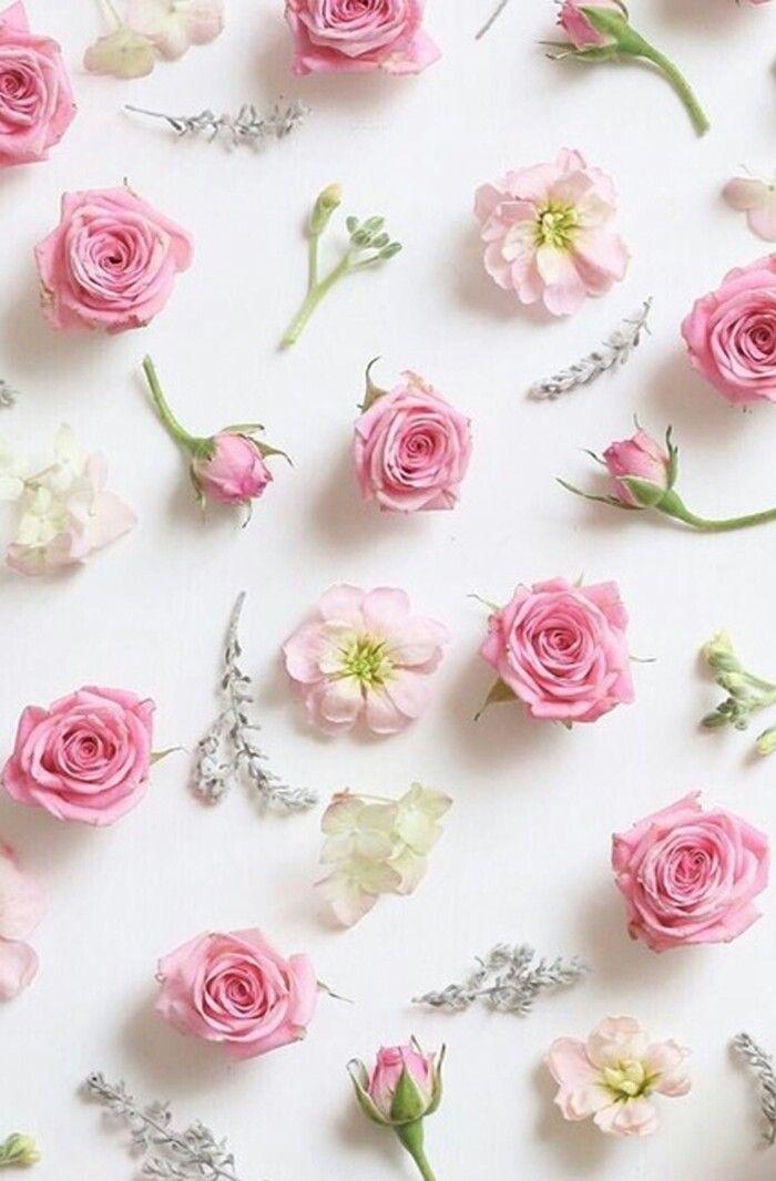 10 besten White flowers Bilder auf Pinterest | Blumen pflanzen ...