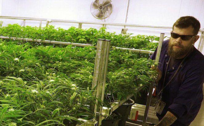 La marihuana seguirá siendo ilegal bajo la Ley Federal de los Estados Unidos  ... - http://www.vistoenlosperiodicos.com/la-marihuana-seguira-siendo-ilegal-bajo-la-ley-federal-de-los-estados-unidos/
