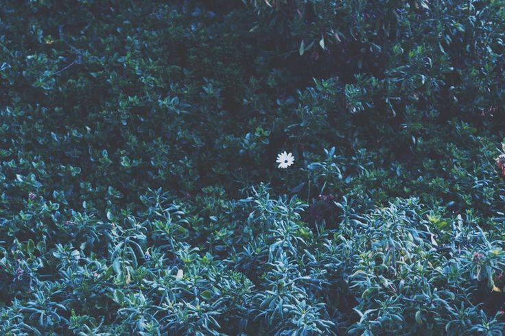 Find you hidden beauty | leeroyesbend | VSCO Grid®