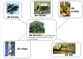 In de herfst vallen de blaadjes van de bomen, maar uit welke delen bestaat een boom nu eigenlijk?