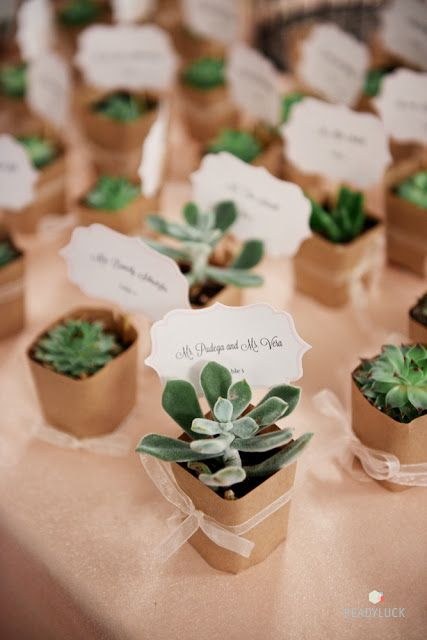 Annie and I really like succulents! I think it would be a cool idea to have them as decorative elements and wedding favors! :)