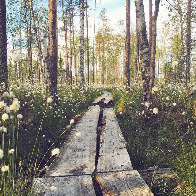 #pilpasuo #finland #oulu #visitfinland