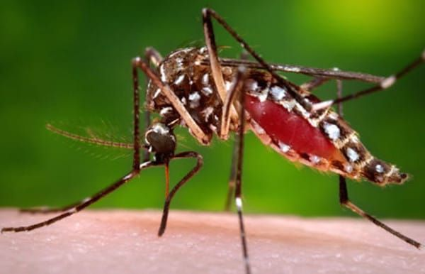 Do mosquitos bite you more than others? There is a reason why...