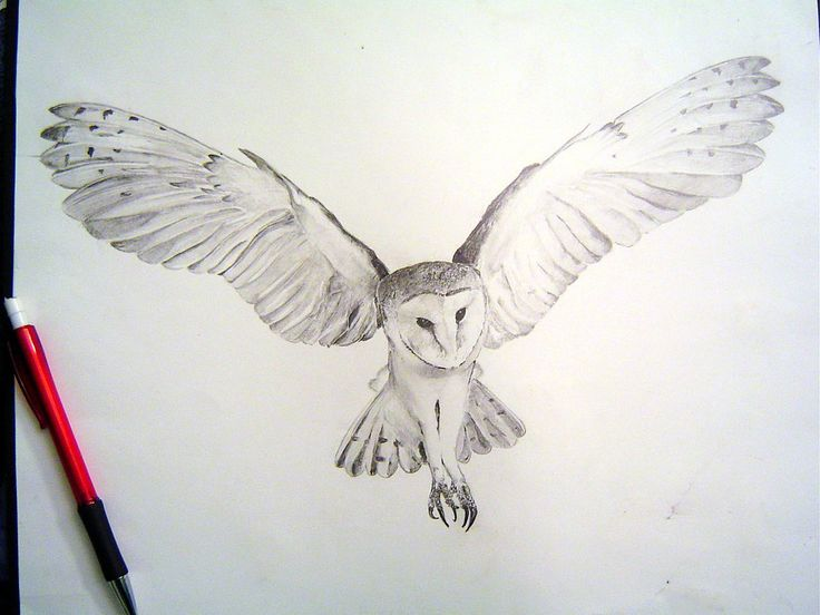 Flying Owl Drawing Barn owl tight render by