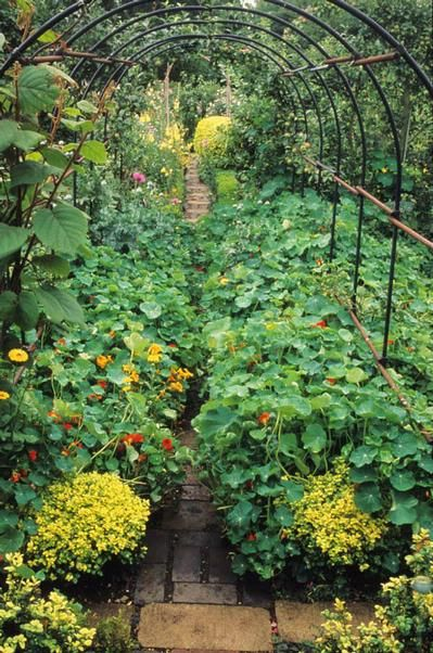 Barnsley House, Gloucestershire. Rosemary Verey's kitchen garden with path under pergola lined with nasturtiums for trellis -- photo John Glover