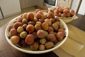 Canning, Dehydrating, and Freezing Plums