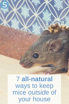 No one want mice getting into their house because no one wants the hassle of getting them out. Here are 7 all-natural ways to keep mice from getting in! http://www.simplemost.com/all-natural-ways-to-deter-mice-from-getting-inside-your-warm-home/?utm_source=pinterest&utm_medium=referral&utm_campaign=copy