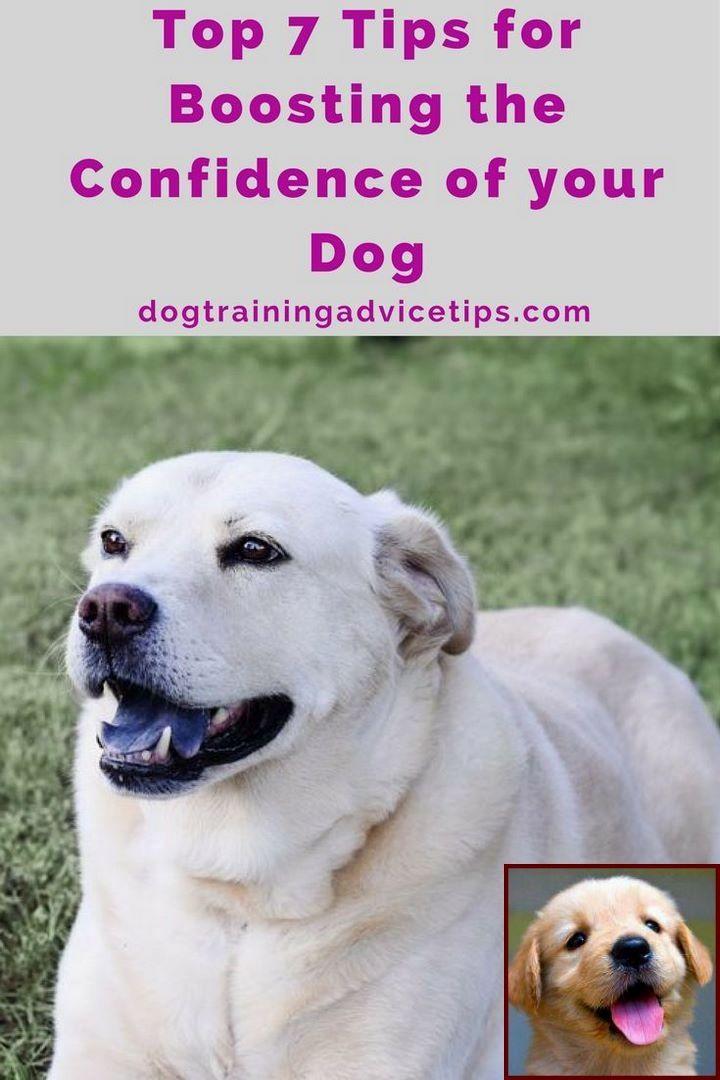 1 Have Dog Behavior Problems Learn About Dog Behavior Trainer