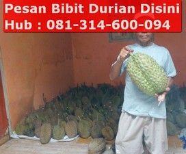 durian bhineka bawor, bibit durian bawor, durian, durian bawor