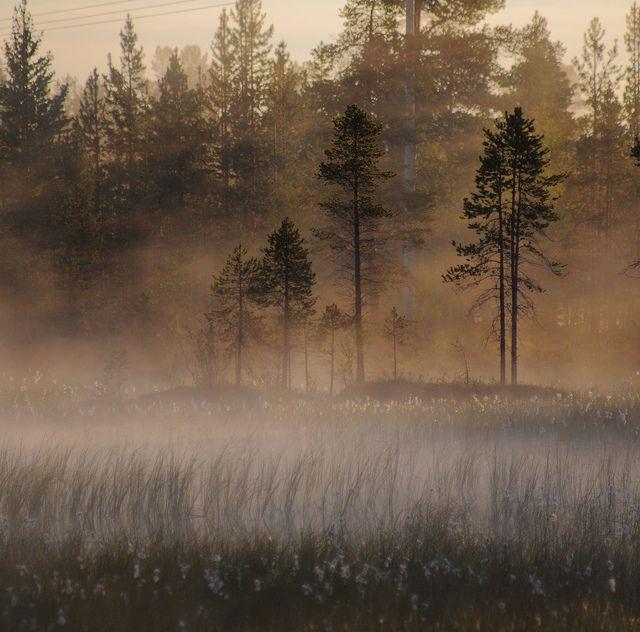 Mist by Jarispr, via Flickr