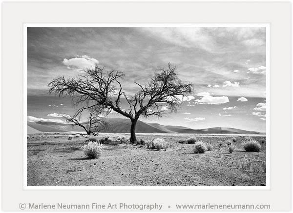 DESERT TREE...an image from my Black & White range...taken in the Namibian desert...the heat scorched down onto the barren sand. The tree held her branches up to the sun. Withstanding yet another sweltering day. The tufts of dry grass blowing gently in the wind. Those that love the desert will relate to the deafening midday silence...tune into this moment of beauty...Love Marlene
